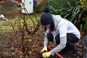 Staff member planting