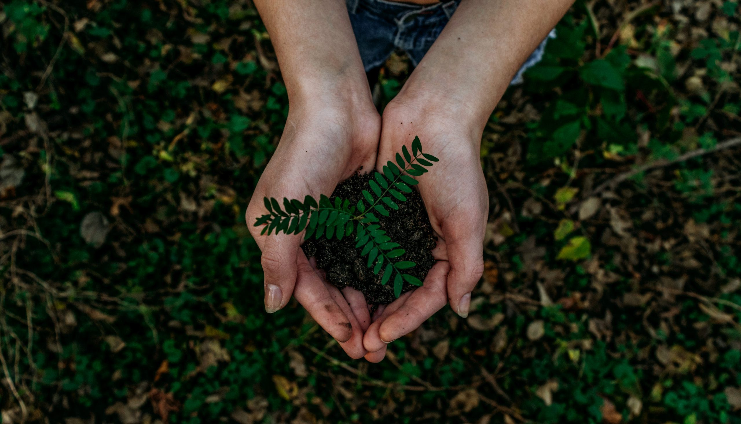 Sustainability image of hands holding a plant and soil